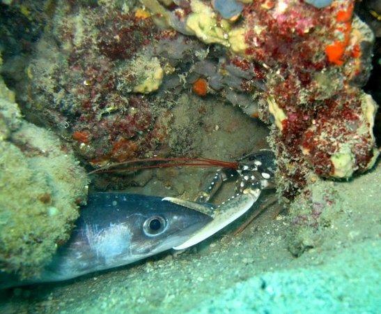Piran Divers