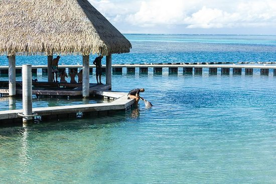 InterContinental Moorea Resort & Spa: Dolphin Centre