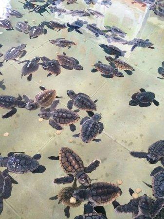 Privilege Aluxes: Turtle farm