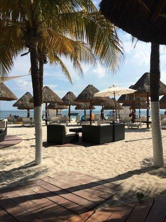 Privilege Aluxes: Beach Bar