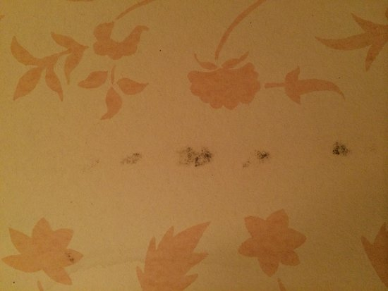 Bourne Hall Hotel: More stains on walls
