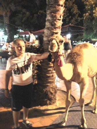 Hammamet Garden Resort & Spa: Kiki