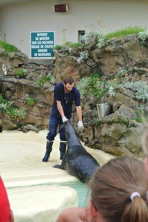 Aquarium de Biarritz: Repas des phoques