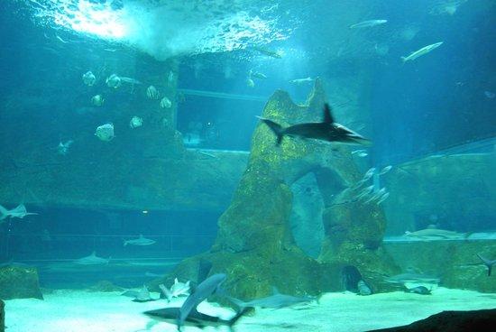 Aquarium de Biarritz: Grand aquarium