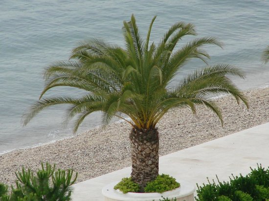 Le Meridien Lav Split : пляж
