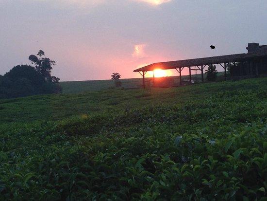 Nyungwe Forest Lodge : coucher de soleil magnifique