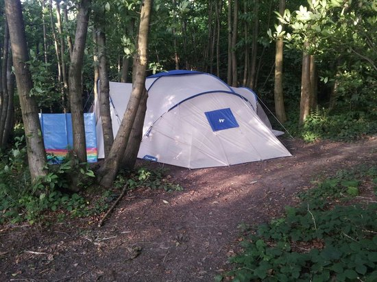 Welsummer Camping: Pitch on the left as you enter the woods as you drive in.