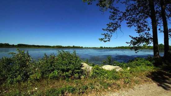 Knoll Farm Bed & Breakfast: wetlands for birds in transit