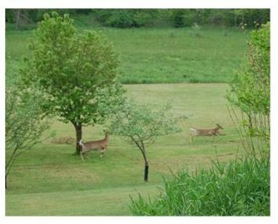Sunnybrook Farm Garden-level Guest Suite: Deer in the orchard