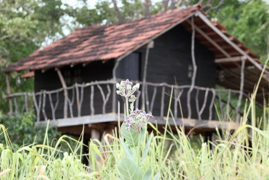 Photo of Eagle'S Wings Guest House Habarana