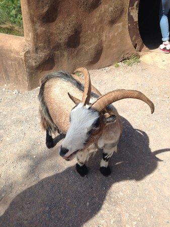 Paignton Zoo Environmental Park: Interactive petting part.