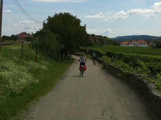 Donau Cycle Path: Cycling through Wachau vineyards