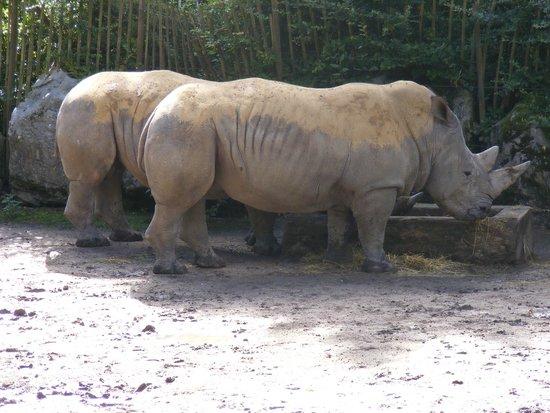 Parc Zoologique: Die Nashörner im Zoo von Lille