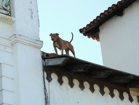 Old Vallarta: Old PV`s way of guarding, put the dog on the roof, we asked locals and were told there`s water t