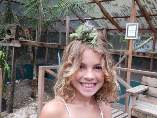 Green Iguana Conservation Project : Iguana hair