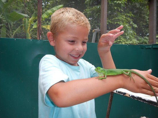 Green Iguana Conservation Project : Just one!