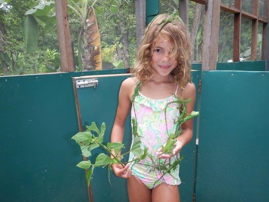 Green Iguana Conservation Project: Iguanas everywhere!