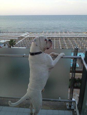 Hotel Michelangelo : Dasko in balcone sul mare