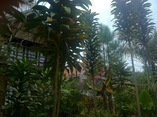 Nature Land Hotel Kalaw: Suite Bungalows in The Garden