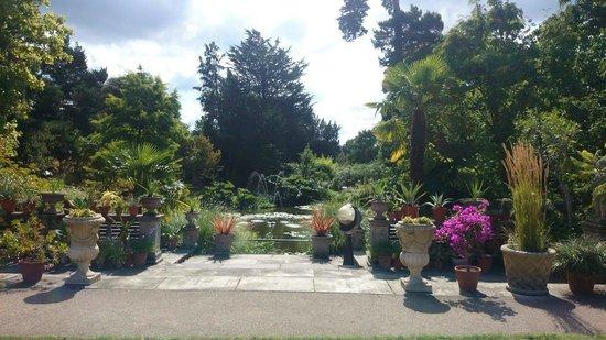 Myddelton House Gardens: Pond