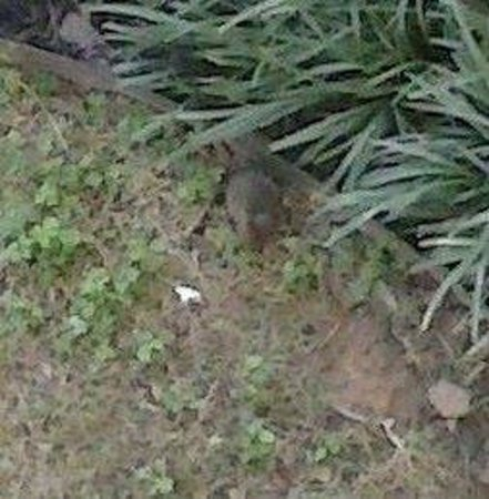 Motel 6 Tulsa South: This is one of the rats that was running around the grounds