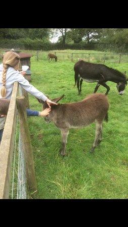 Thrift Farm: Donkey