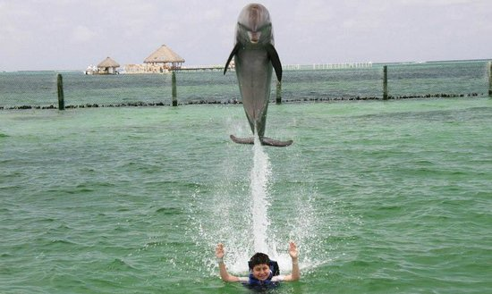 Dolphin Explorer: Jump over my kid