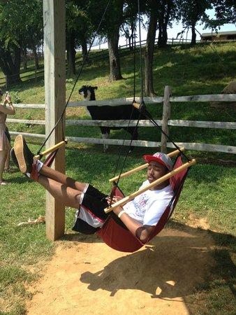 Cherry Crest Adventure Farm: The Air Chair