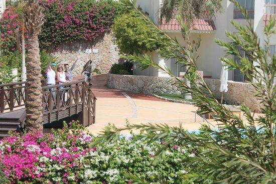 Hilton Sharks Bay Resort : территория отеля