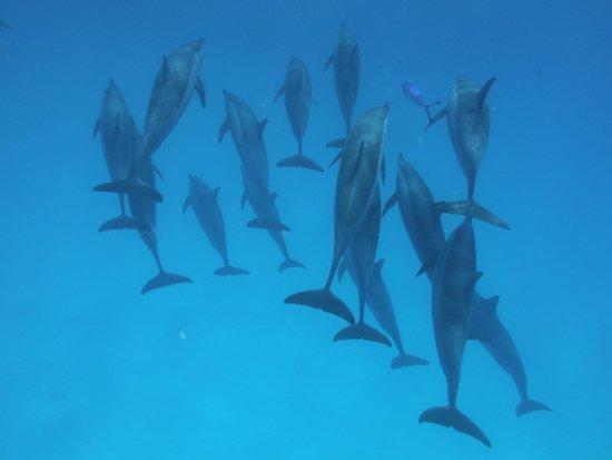 Brayka Bay Reef Resort: Dolphin house Samadai