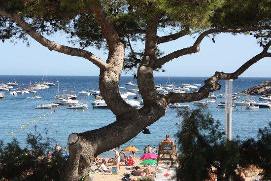 Hotel Tamariu: Our view through the tree