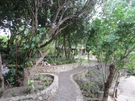 The Blue Orchid Resort : Natural paths everywhere surrounded by lush vegetation