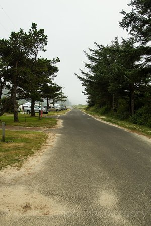 Cape Lookout State Park: The road in the campground