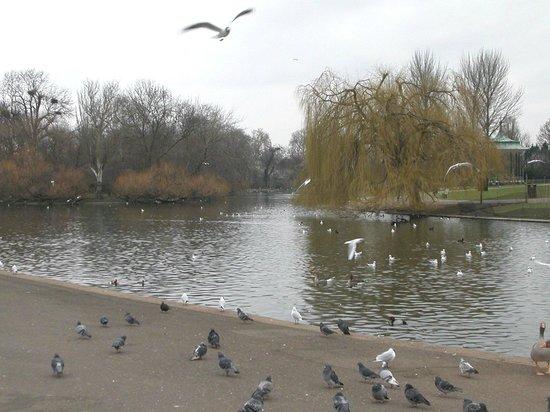 Regent's Park: RP
