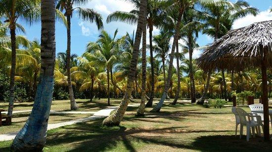 Sol Sirenas Coral Resort: Sol Sirena Coral