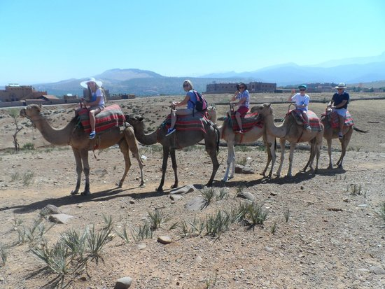 4X4 Camel - Private Day Tours : Camel Ride