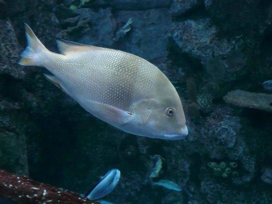 Aquarium Mandalay Bay Picture Of Mandalay Bay Aquarium