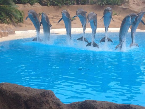 Loro Parque: Best show of the day