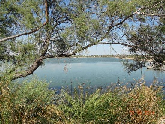 Les Poissons D'argent : vue du restaurant sur le lac