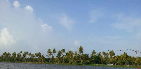 Abad Whispering Palms Lake Resort: Birds flying during evening.