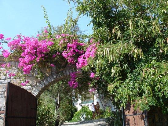 Green Beach Resort: Территоия