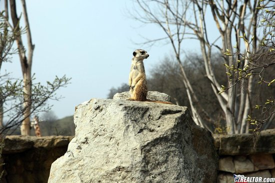 Prague Zoo: сурин