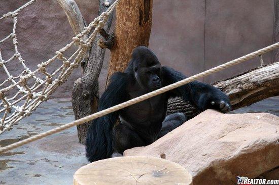 Prague Zoo: добрый обезьян