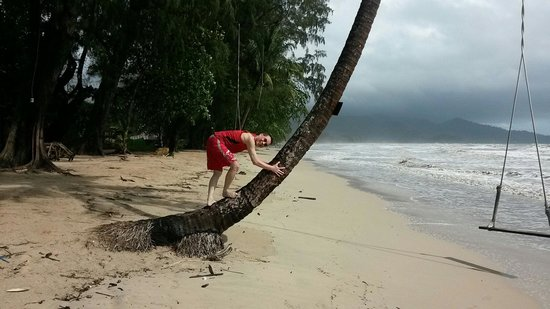 Koh Chang Resort & Spa: Coconut tree in front of Koh Chang Resort and Spa