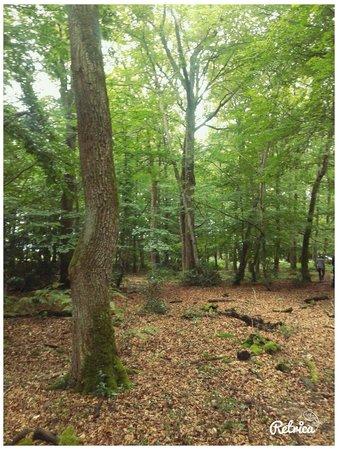 Saint-Bonnet-Troncais, França: Un sentier très joli au coeur de la forêt