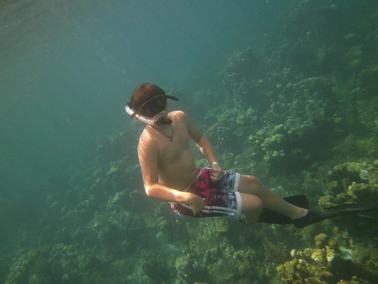 Sunscape Cove Montego Bay: Snorkeling in Montego Bay