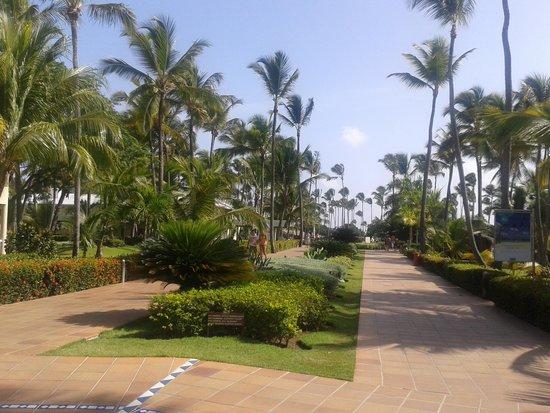 Sirenis Punta Cana Resort Casino & Aquagames: Paseo de la entrada a la playa.