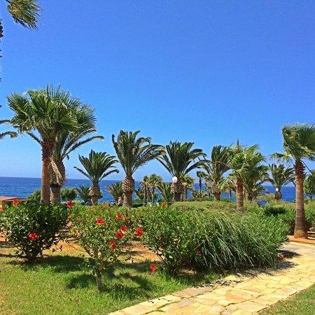 Iberostar Creta Panorama & Mare : VUE DE LA CHAMBRE