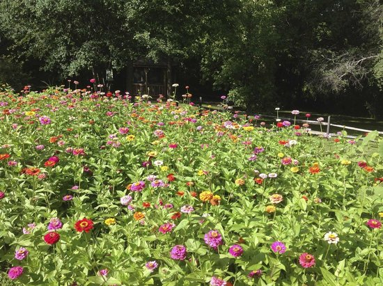 A Room in the Village Bed & Breakfast: Zillion Zinnias - Backyard in Summer