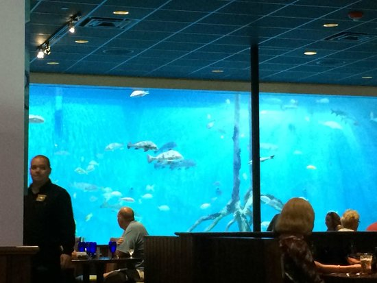 Guy Harvey Outpost, a TradeWinds Beach Resort: tank at Rum Fish Grill